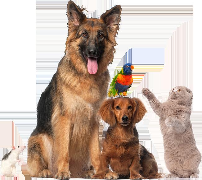 How Long Does A Service Dog Registraiton Last
